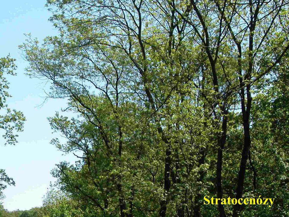 Stratocenózy