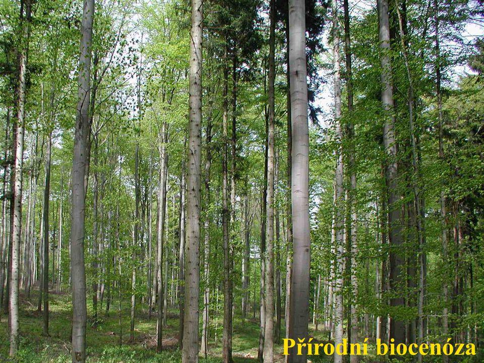 Přírodní biocenóza