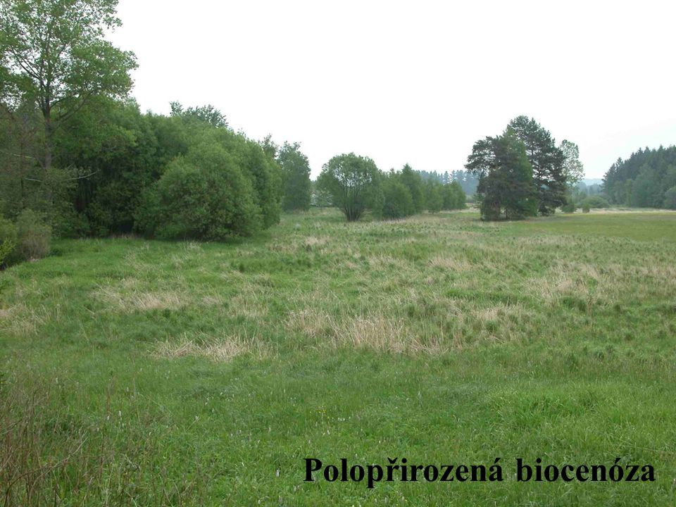Polopřirozená biocenóza