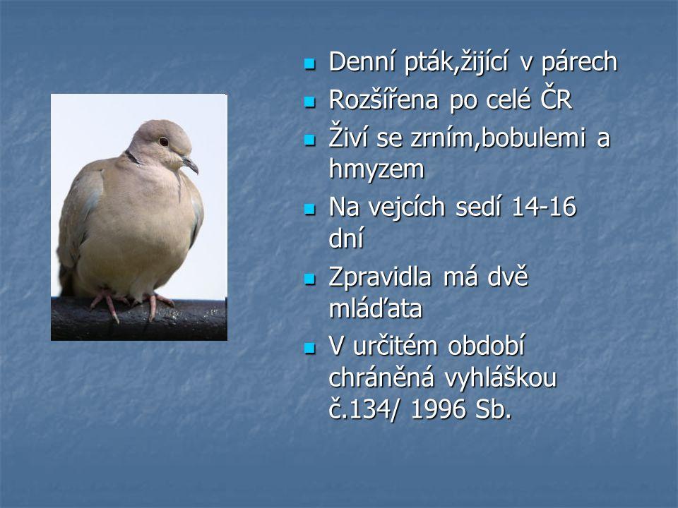 Denní pták,žijící v párech