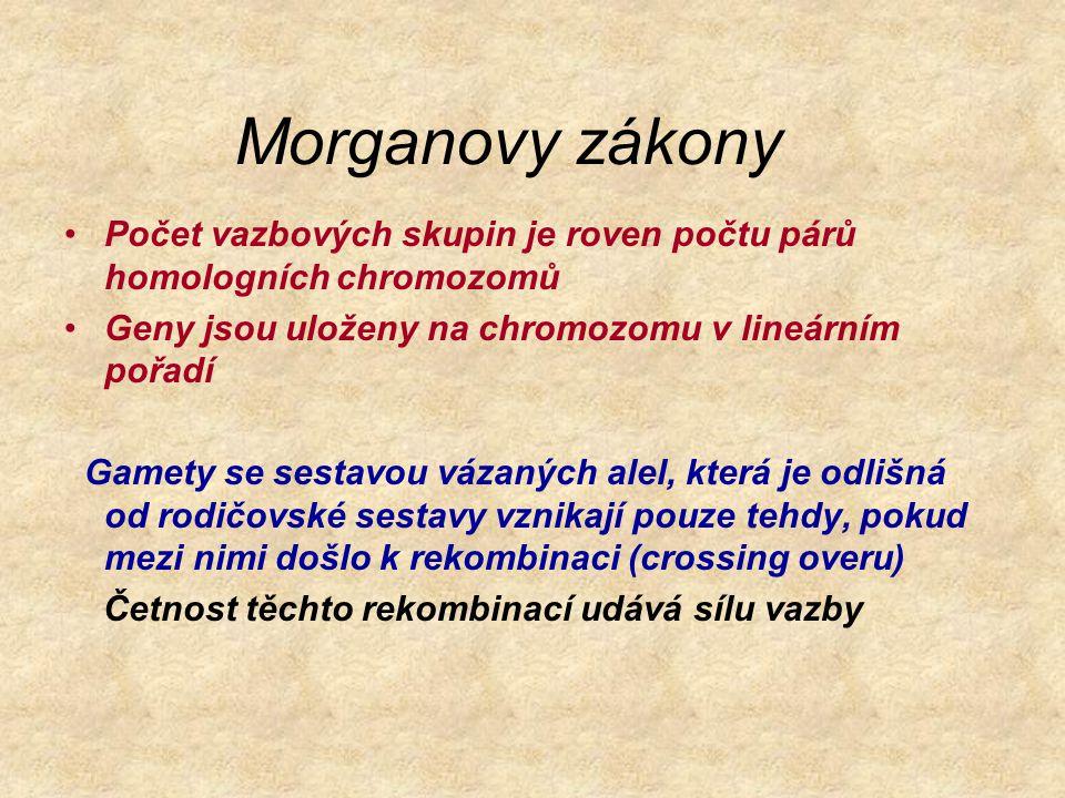 Morganovy zákony Počet vazbových skupin je roven počtu párů homologních chromozomů. Geny jsou uloženy na chromozomu v lineárním pořadí.