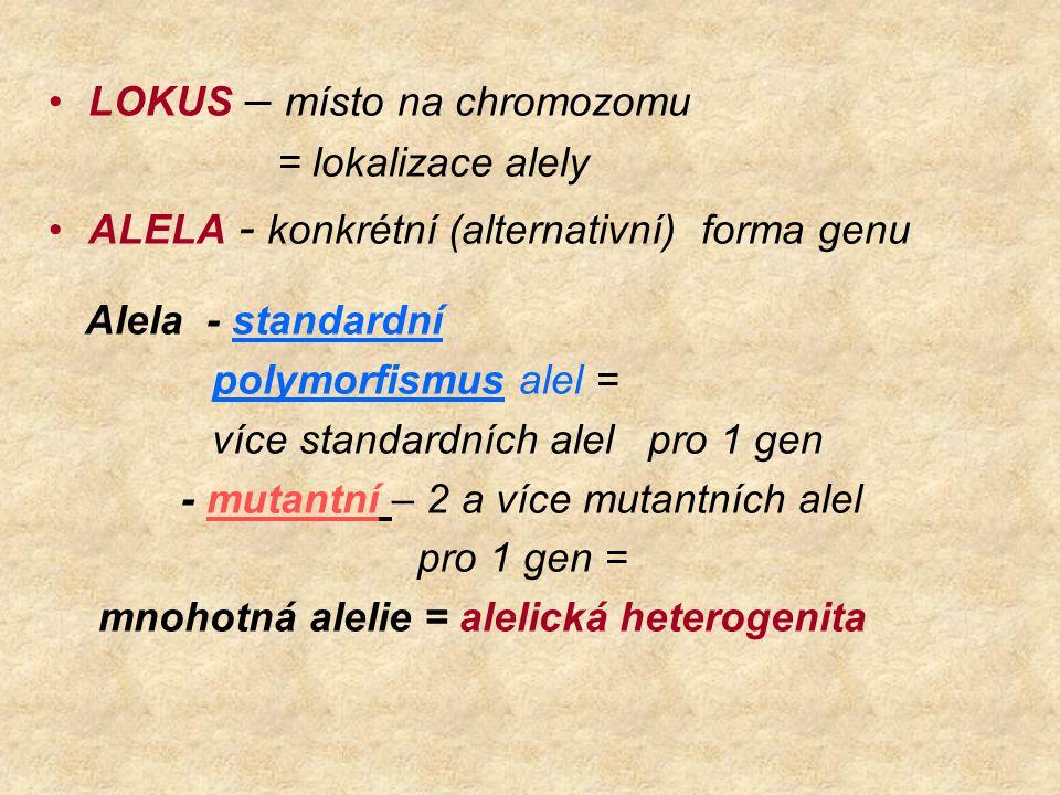 LOKUS – místo na chromozomu