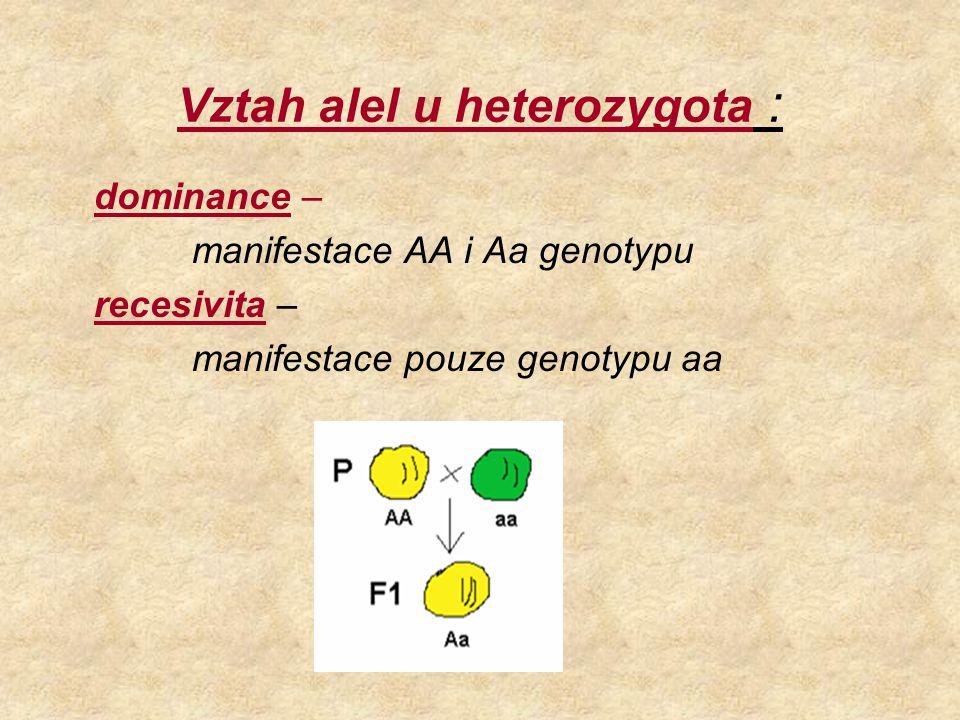 Vztah alel u heterozygota :
