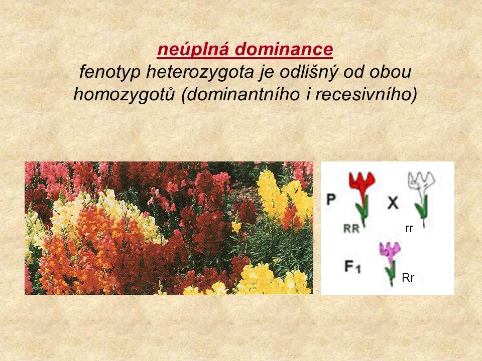 neúplná dominance fenotyp heterozygota je odlišný od obou homozygotů (dominantního i recesivního)