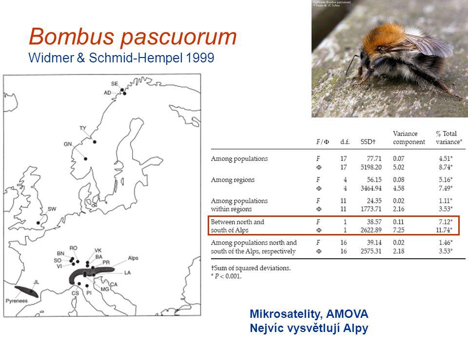 Bombus pascuorum Widmer & Schmid-Hempel 1999