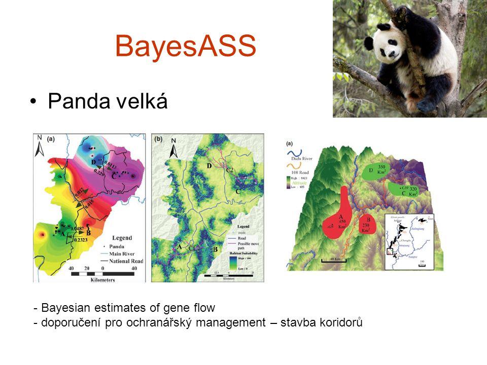 BayesASS Panda velká - Bayesian estimates of gene flow