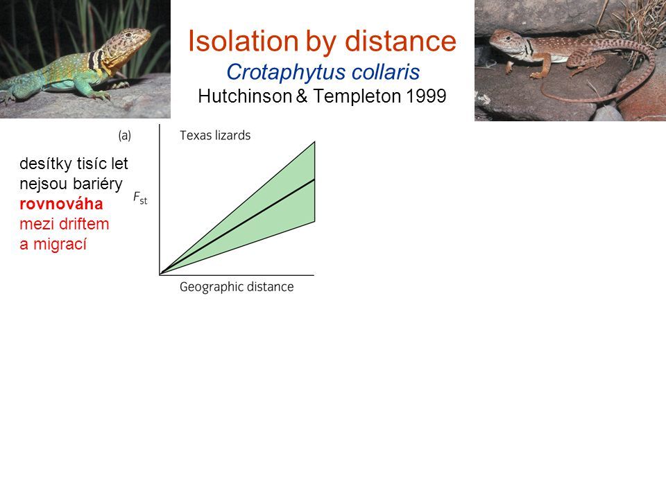 Isolation by distance Crotaphytus collaris Hutchinson & Templeton 1999