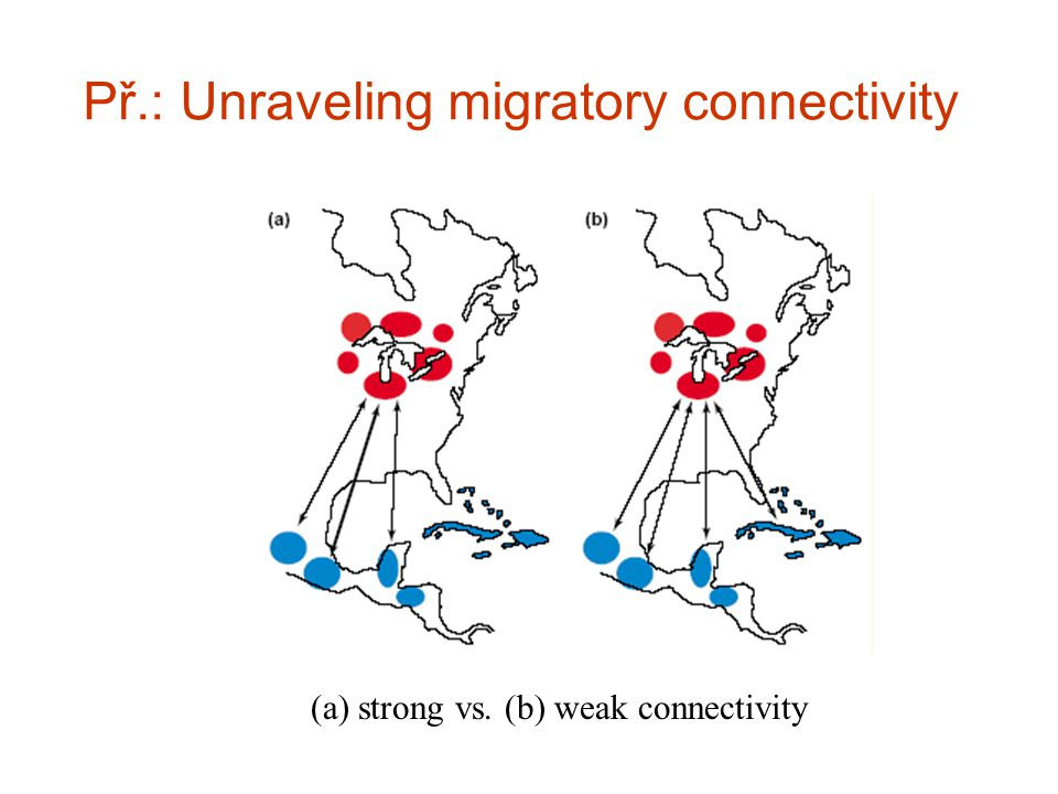 Př.: Unraveling migratory connectivity