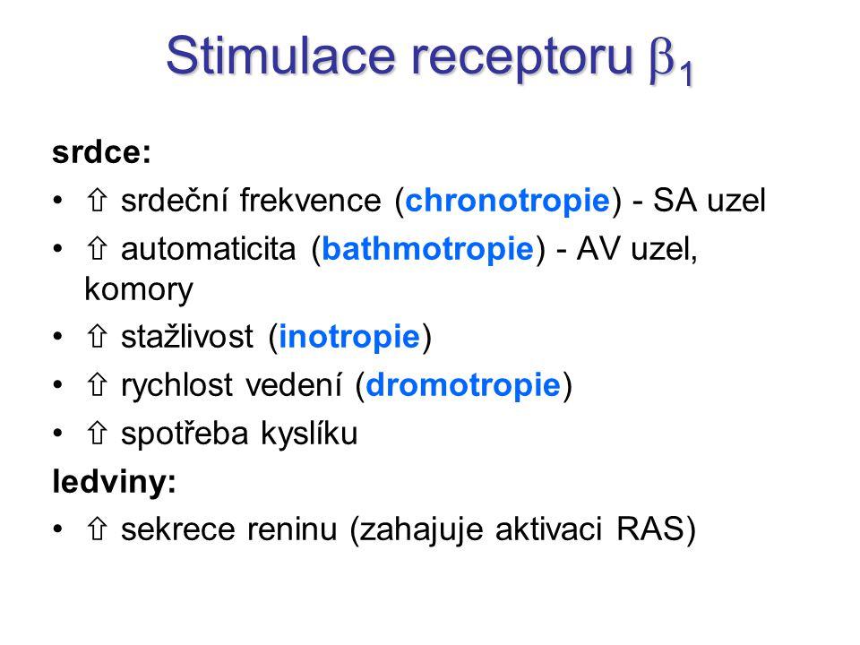 Stimulace receptoru b1 srdce: