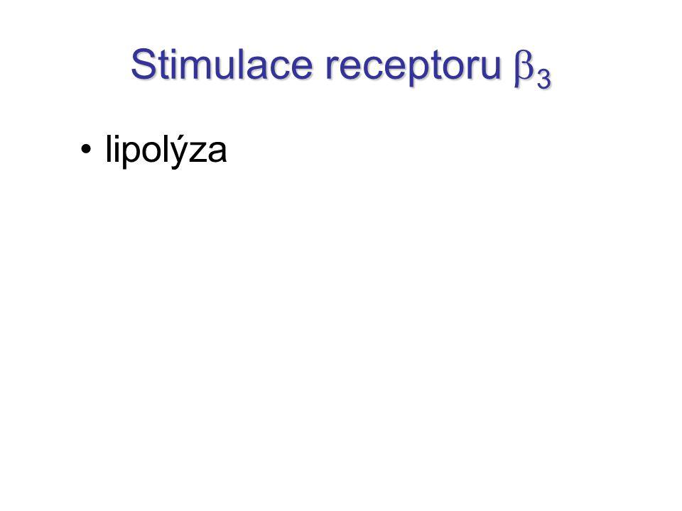 Stimulace receptoru b3 lipolýza
