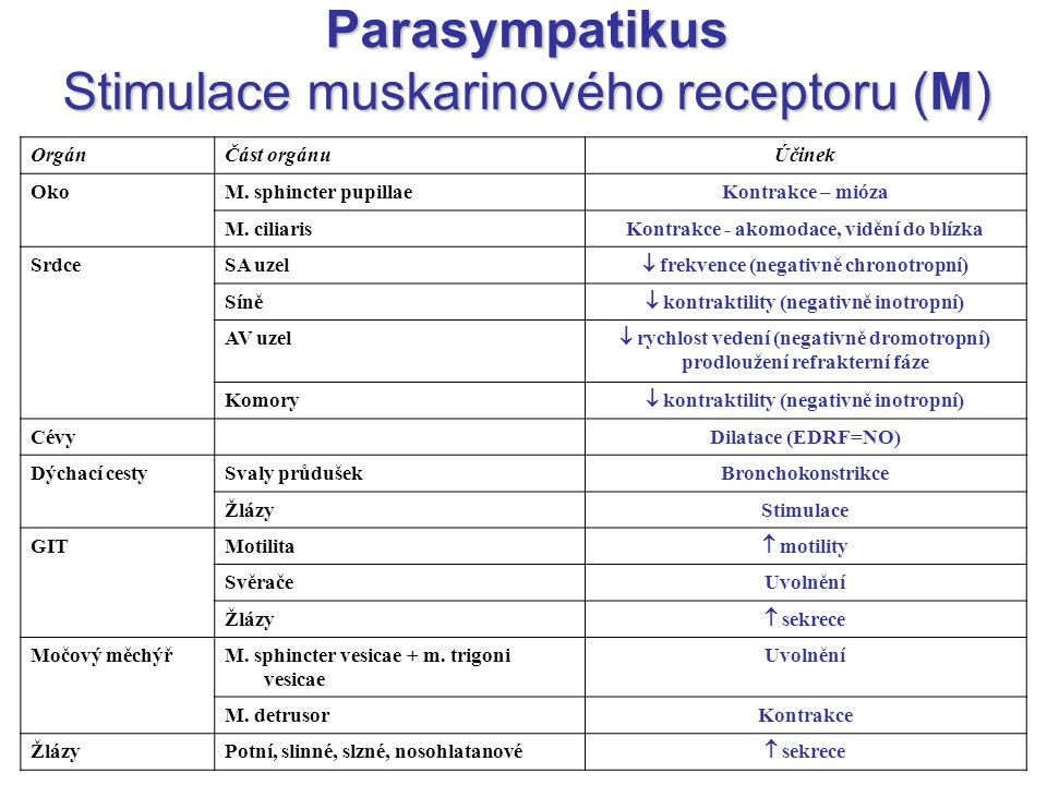Parasympatikus Stimulace muskarinového receptoru (M)