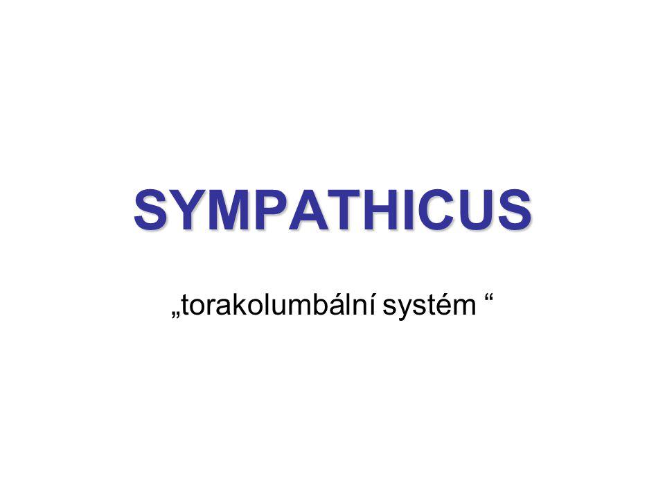 """""""torakolumbální systém"""
