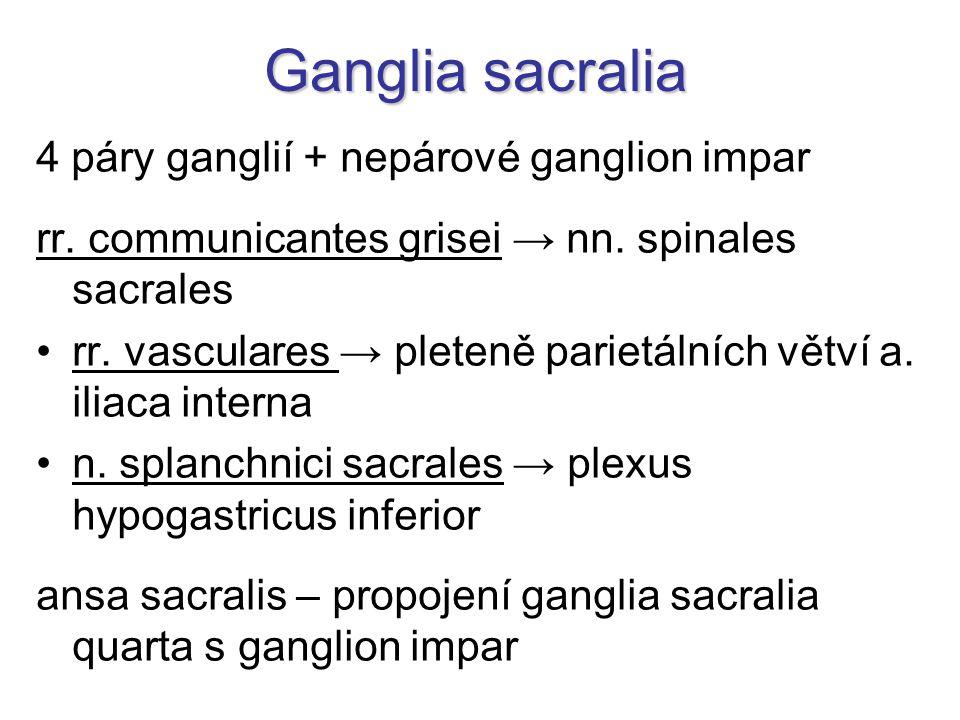 Ganglia sacralia 4 páry ganglií + nepárové ganglion impar