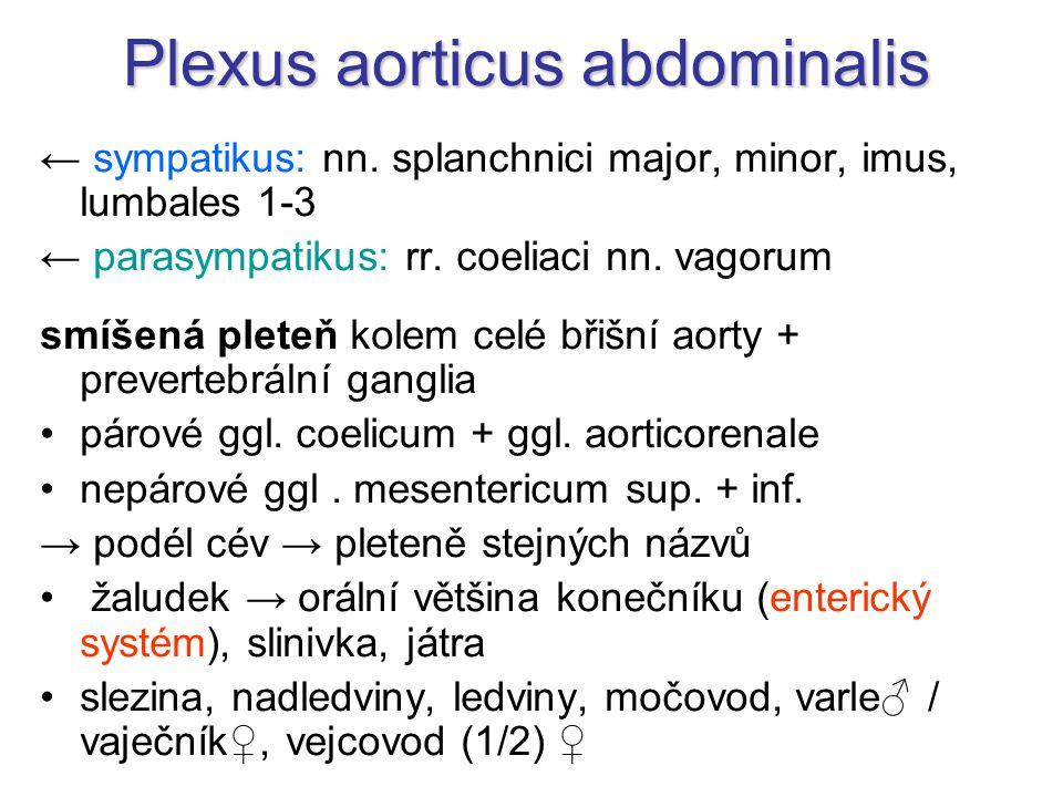 Plexus aorticus abdominalis
