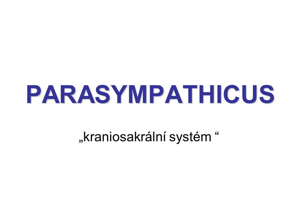"""""""kraniosakrální systém"""