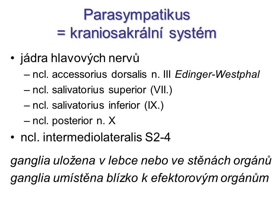 Parasympatikus = kraniosakrální systém