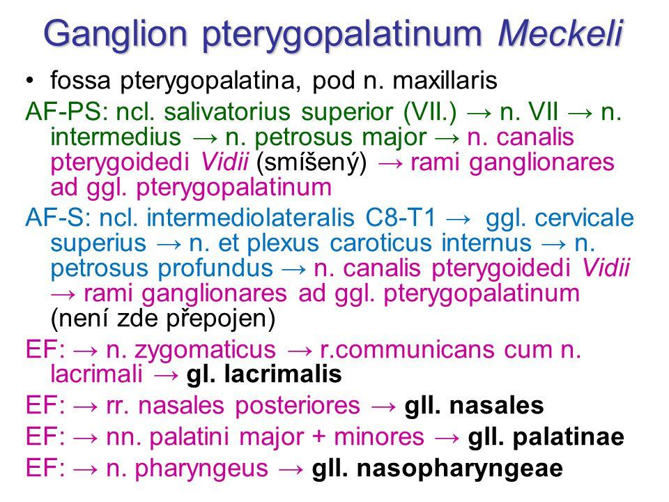 Ganglion pterygopalatinum Meckeli
