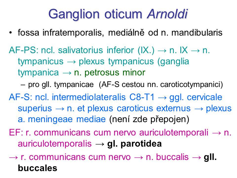 Ganglion oticum Arnoldi