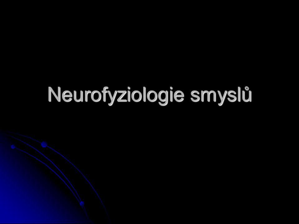 Neurofyziologie smyslů