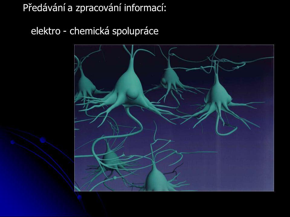 Předávání a zpracování informací: elektro - chemická spolupráce