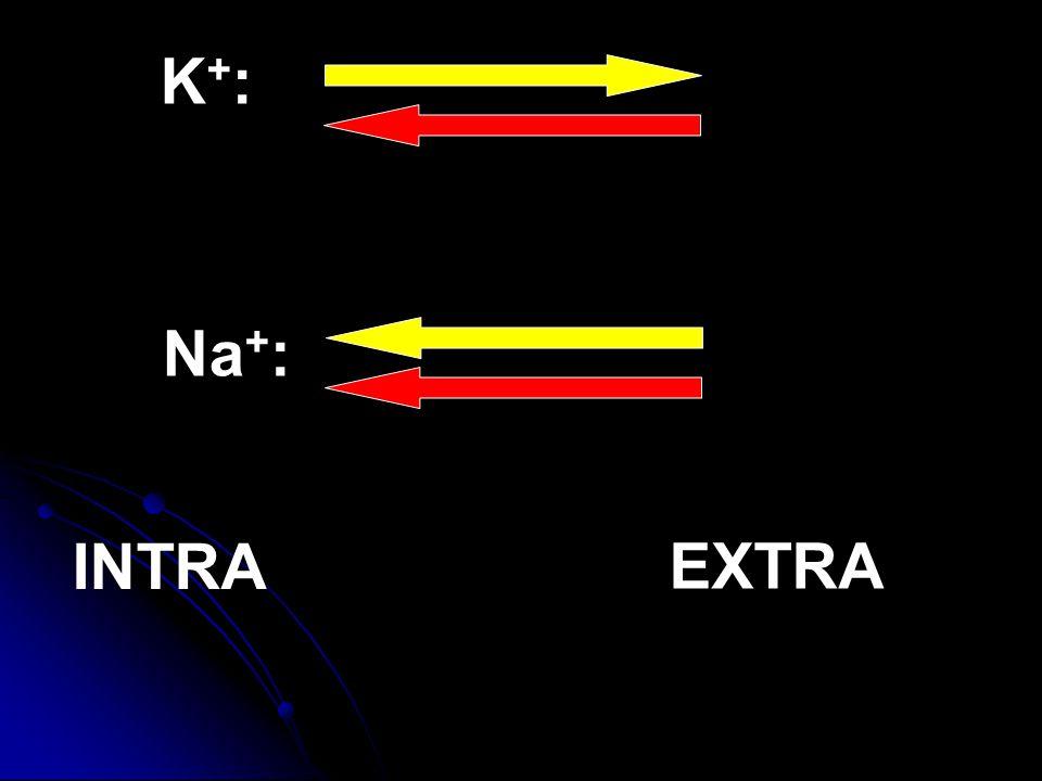 K+: Na+: INTRA EXTRA