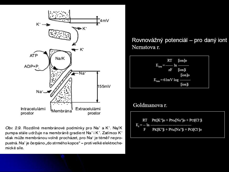 Rovnovážný potenciál – pro daný iont Nernstova r.