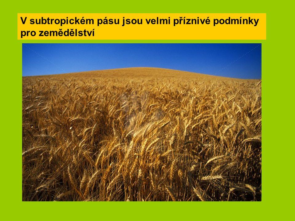V subtropickém pásu jsou velmi příznivé podmínky pro zemědělství