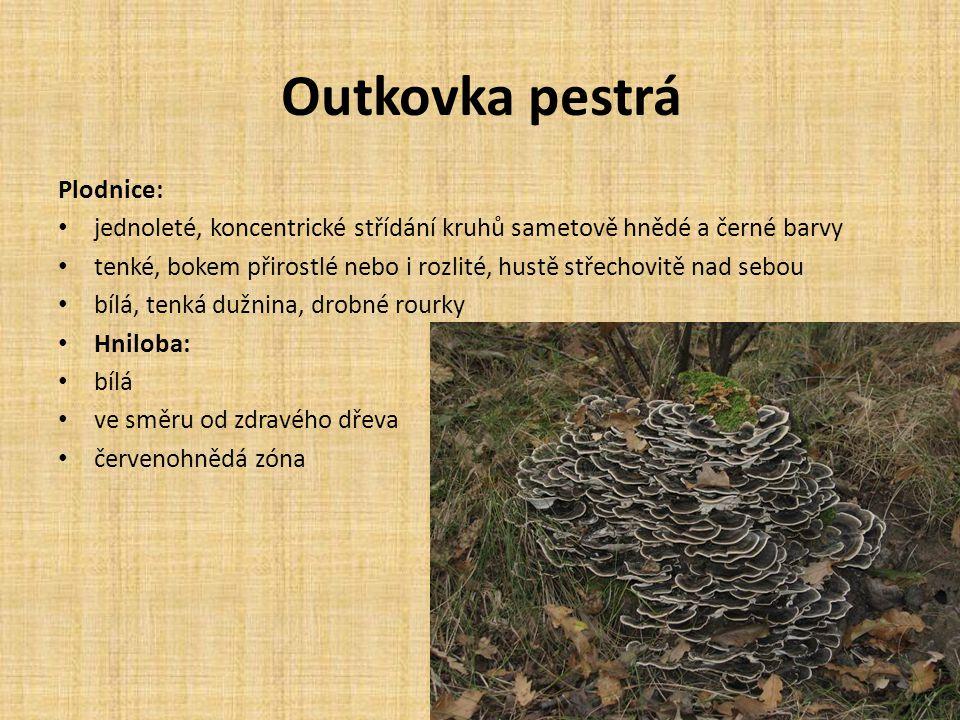 Outkovka pestrá Plodnice:
