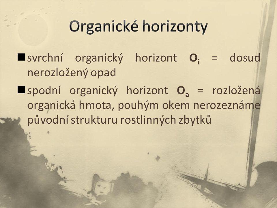 Organické horizonty svrchní organický horizont Oi = dosud nerozložený opad.