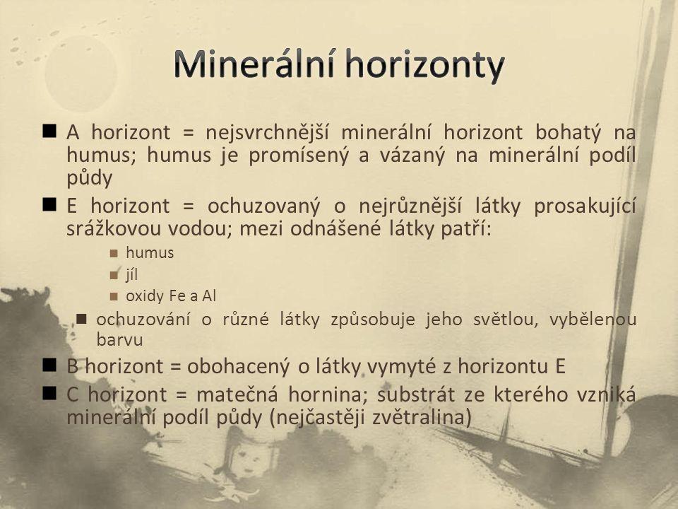 Minerální horizonty A horizont = nejsvrchnější minerální horizont bohatý na humus; humus je promísený a vázaný na minerální podíl půdy.