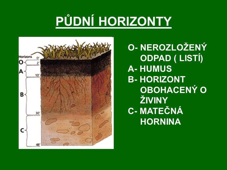 PŮDNÍ HORIZONTY O- NEROZLOŽENÝ ODPAD ( LISTÍ) A- HUMUS B- HORIZONT