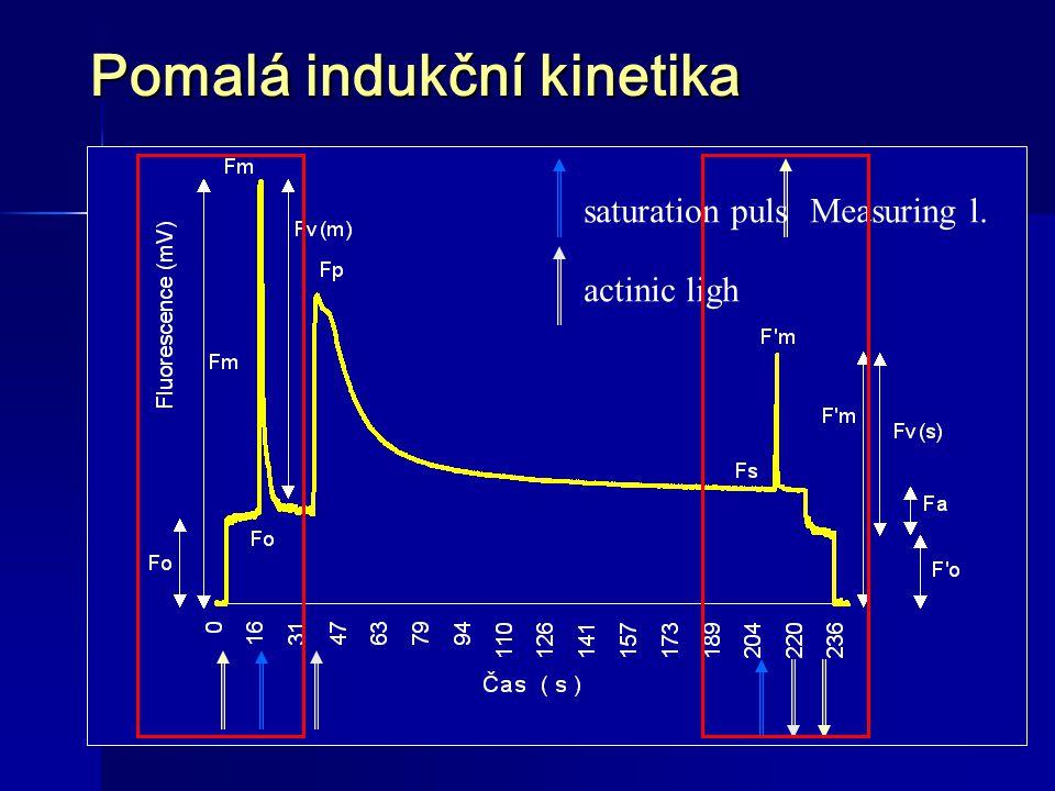 Pomalá indukční kinetika