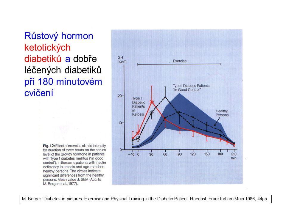 Růstový hormon ketotických diabetiků a dobře léčených diabetiků při 180 minutovém cvičení