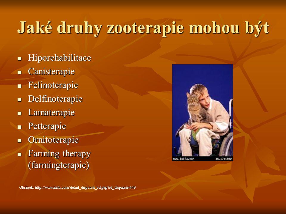 Jaké druhy zooterapie mohou být