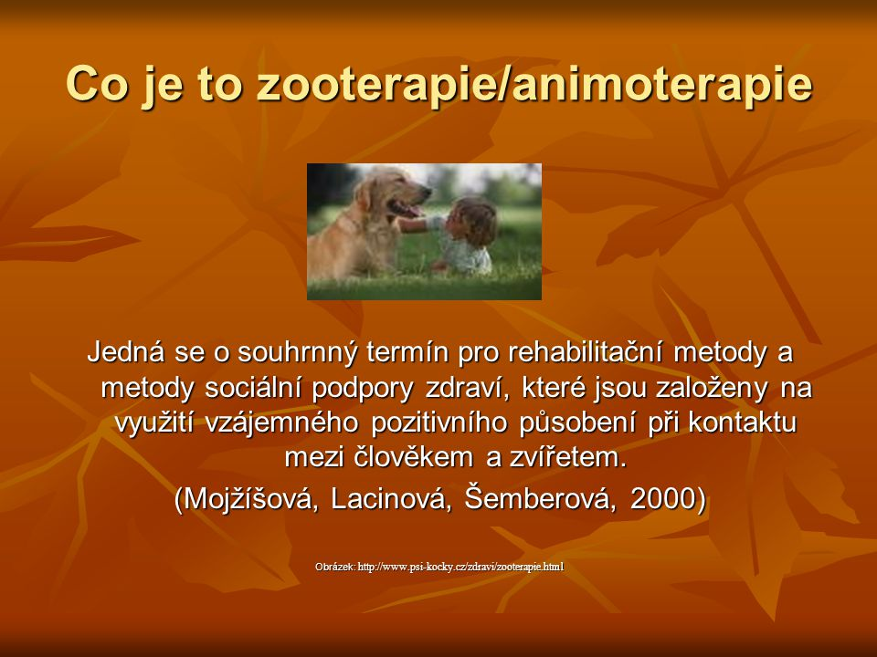 Co je to zooterapie/animoterapie
