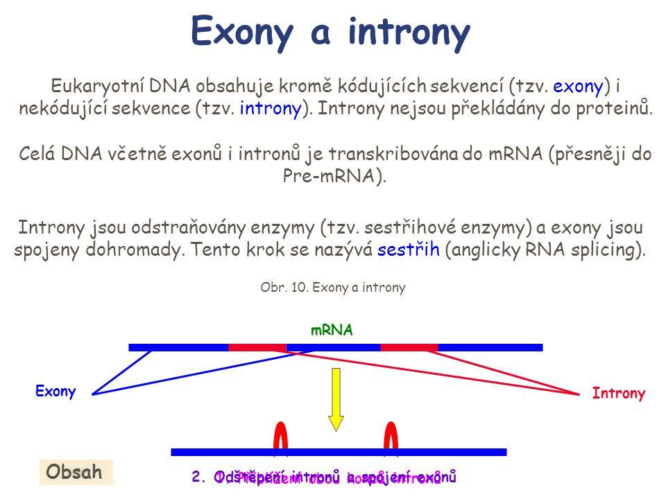 Exony a introny