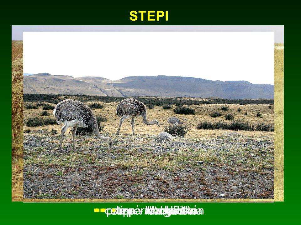 STEPI pampa - Argentina prérie – USA step – Mongolsko step – Maďarsko