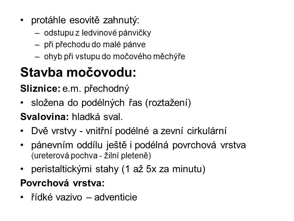 Stavba močovodu: protáhle esovitě zahnutý: Sliznice: e.m. přechodný