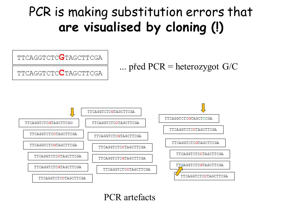 PCR is making substitution errors that are visualised by cloning (!)