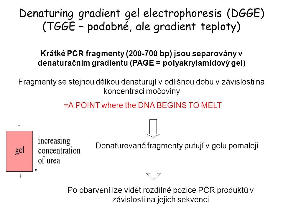 Denaturing gradient gel electrophoresis (DGGE) (TGGE – podobné, ale gradient teploty)