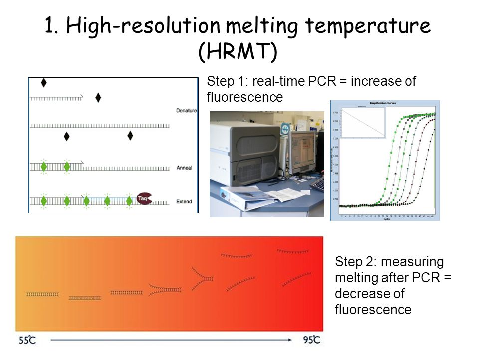 1. High-resolution melting temperature (HRMT)