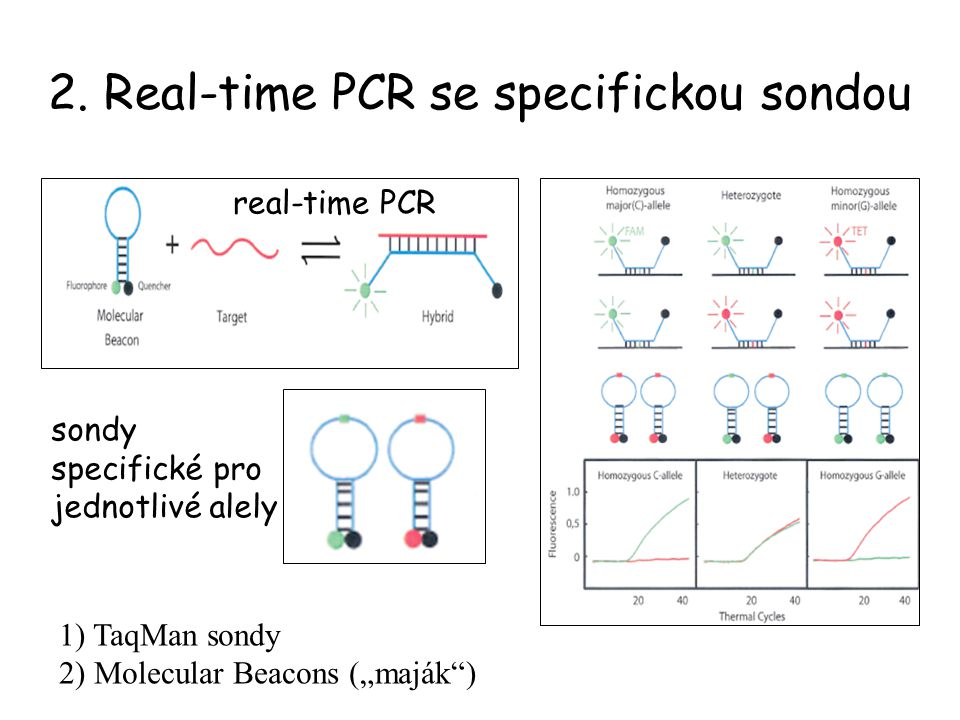 2. Real-time PCR se specifickou sondou