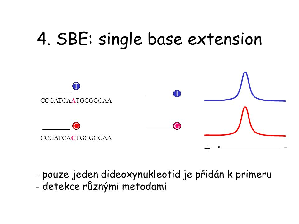 4. SBE: single base extension