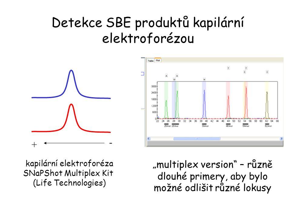 Detekce SBE produktů kapilární elektroforézou