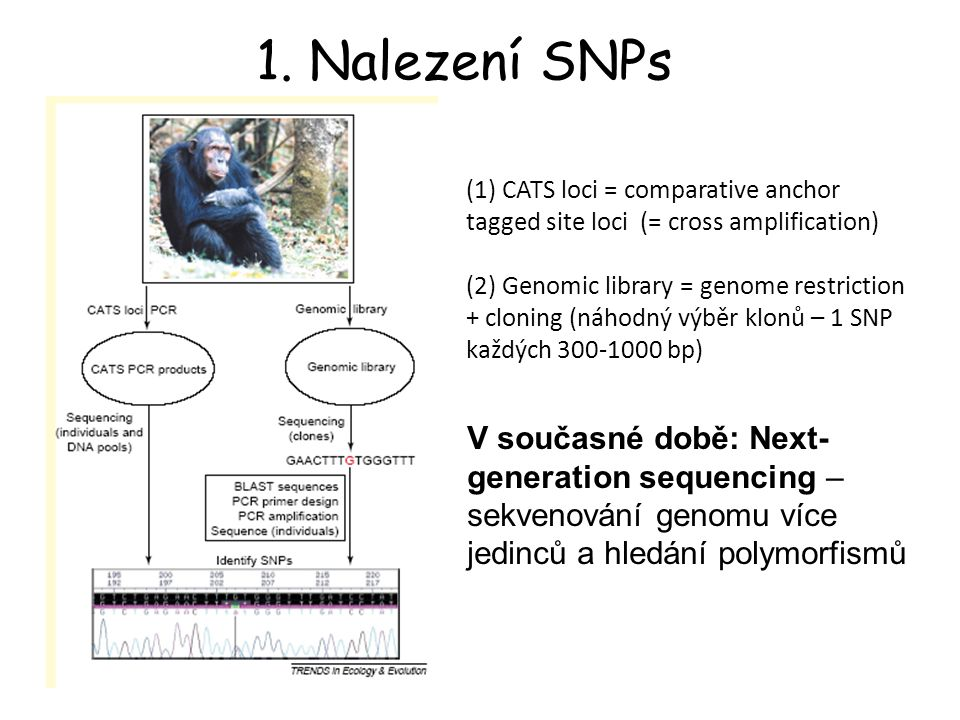 1. Nalezení SNPs (1) CATS loci = comparative anchor tagged site loci (= cross amplification)