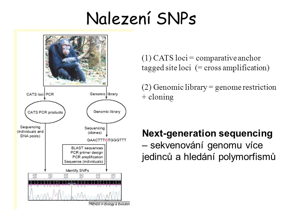 Nalezení SNPs (1) CATS loci = comparative anchor tagged site loci (= cross amplification) (2) Genomic library = genome restriction + cloning.