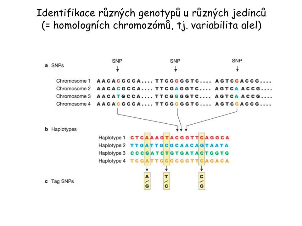 Identifikace různých genotypů u různých jedinců