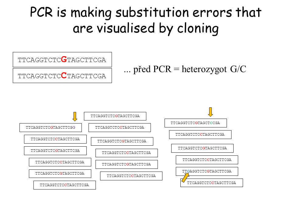 PCR is making substitution errors that are visualised by cloning