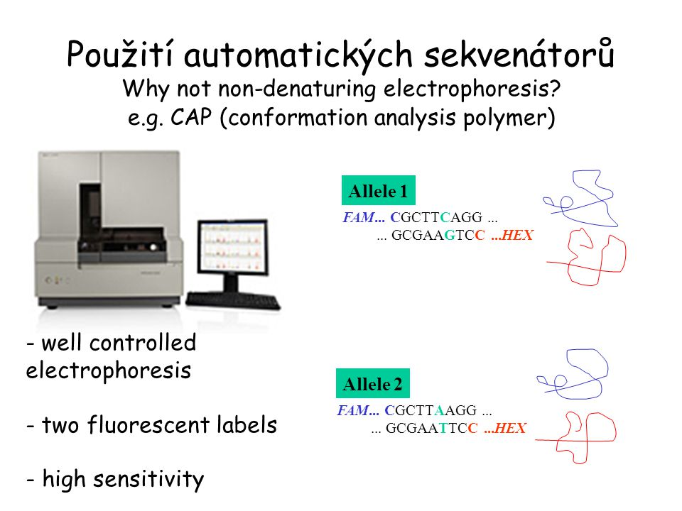 Použití automatických sekvenátorů Why not non-denaturing electrophoresis