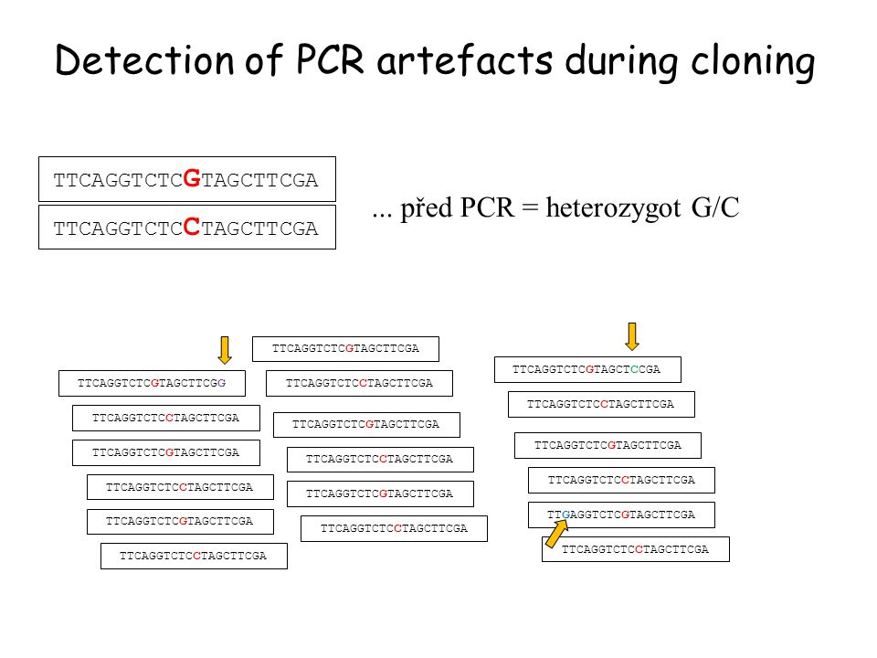 Detection of PCR artefacts during cloning